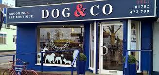 Resultado de imagen para pet shop boutique