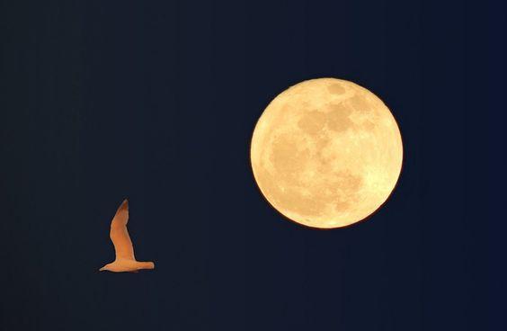 Estou na lua___