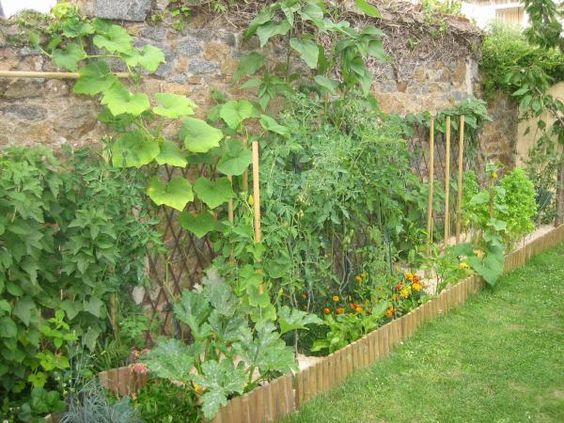 Potager contre un mur de pierre garden pinterest for Amenagement potager idees