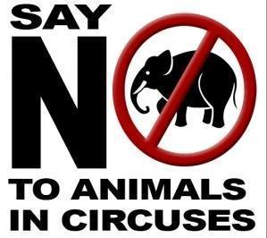 Dites non aux cirques avec animaux