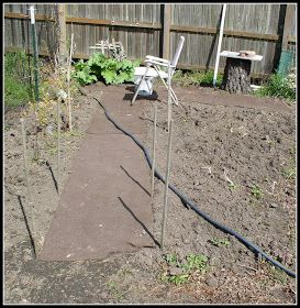 Dirt Colored Carpet for a pathway in your garden!