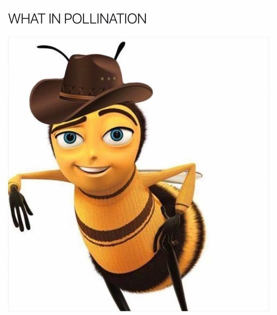 What in BEE: