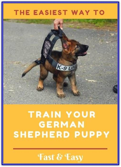 Training A Puppy Should Start On Day One German Shepherd Puppies
