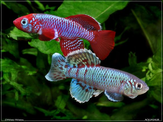 Animals eggs and freshwater fish on pinterest for Cute freshwater fish