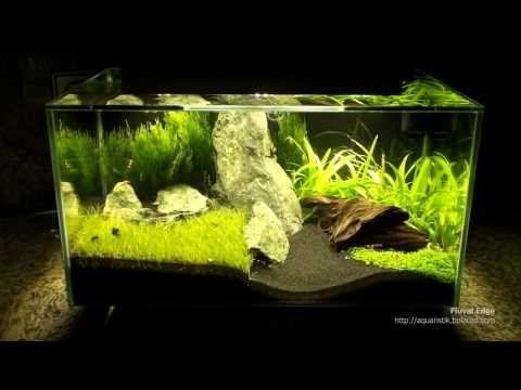 Fluval edge mit extra beleuchtung nano aquascape for Aquarium beleuchtung