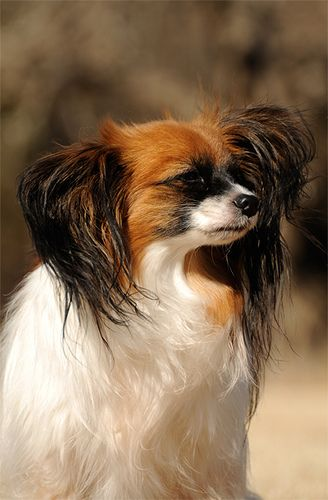 Serious dog by Summer_Papillon, via Flickr