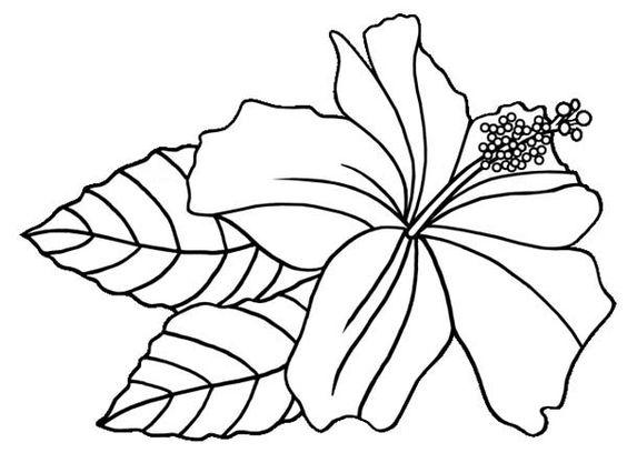 Hibiscus flower hawaiin hibiscus flower coloring page - Dessin d hibiscus ...