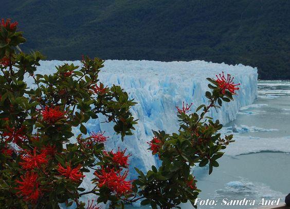 El glaciar y sus plantas silvestres