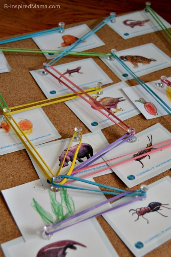 Our Hands on Food Web Board - Science for Kids at B-Inspired Mama - Love this activity!