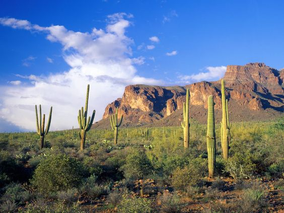 Superstition Mountains, Tonto National Forest, Arizona, USA