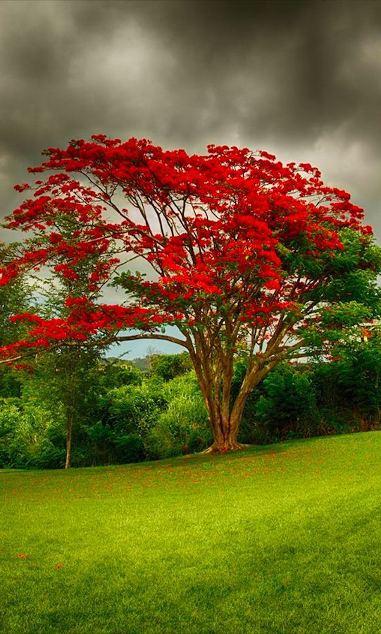 Beautiful red tree, things that are red