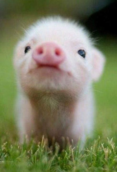 All Kinds Of Cute Animal Babies Warm Your Heart Sooant Baby Animals Funny Cute Baby Pigs Baby Farm Animals