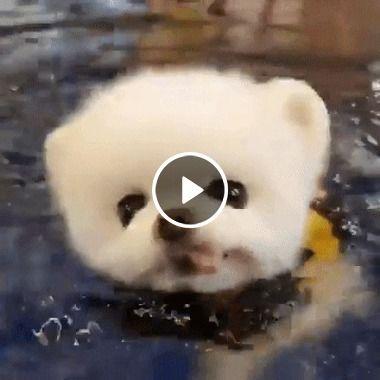 Todo bebezinho precisa aprender a nadar, até os bebes cachorros