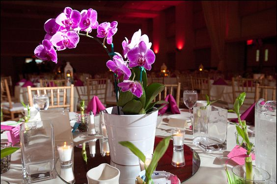 Orchids orchid centerpieces and on pinterest