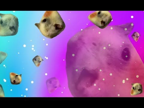Birb Is The Word Birb Memes Clean Credits In Desc Youtube Funny Parrots Pet Birds Parrot