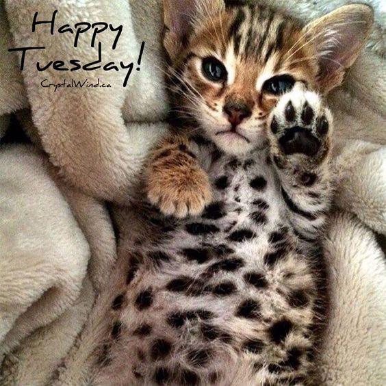 #Happy #Tuesday! <img src=