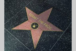 How to Create Your Own Hollywood Star   eHow.com