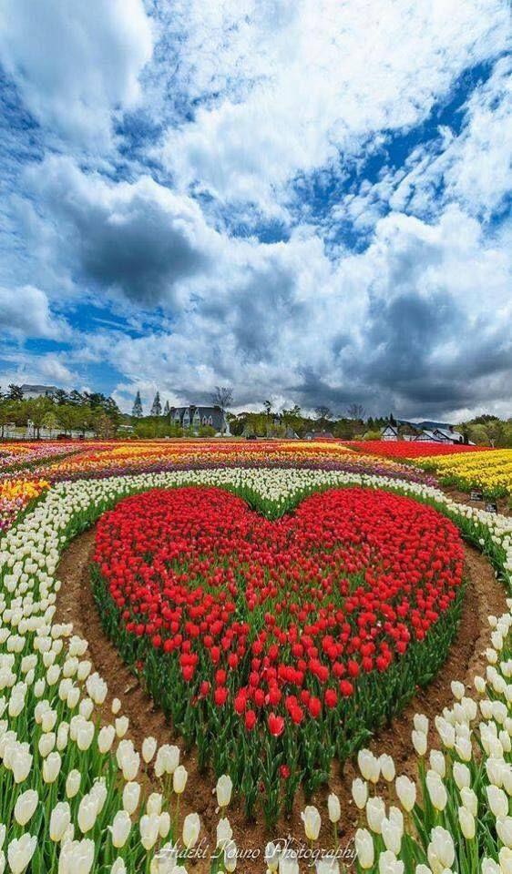 Https Www Facebook Com Aimez Nature Love Nature Photos A 489735174415604 1073741830 295255257196931 1726620744060368 Type Taman Indah Seni Pertamanan Bunga