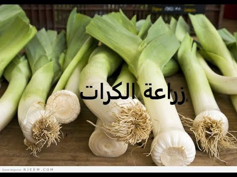كرات طرق زراعة من البداية لنهاية Allium Ampeloprasum حلقة 263 Youtube Garlic Vegetables Food