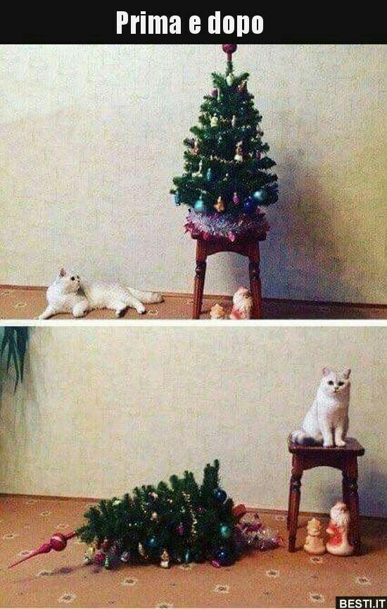 Immagini Divertenti Animali Natale.Pin Di Sava Dima Su Barzellette Umorismo Sui Gatti Gattini Divertenti Immagini Divertenti