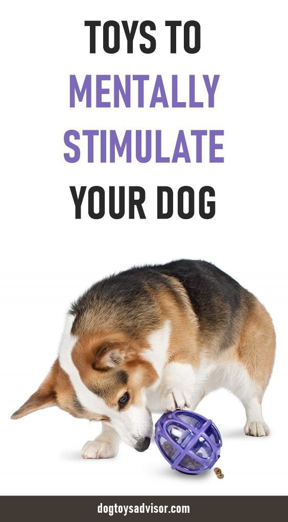 10 Toys To Mentally Stimulate Your Dog Interactive Dog Toy Dog