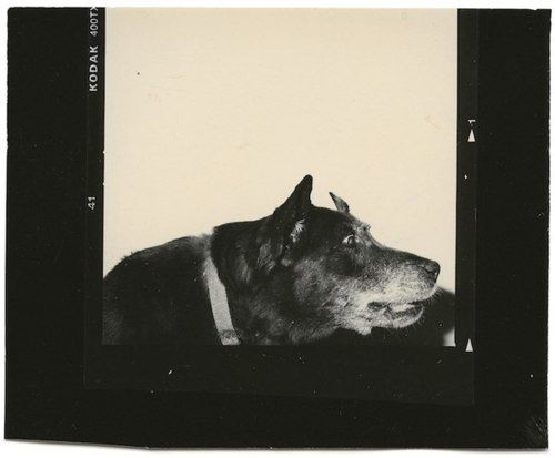 dog noir