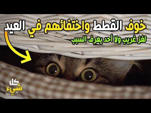 أين تذهب القطط يوم العيد وتختفي تماما الإجابة مذهلة بحق Youtube Movie Posters Poster Lockscreen