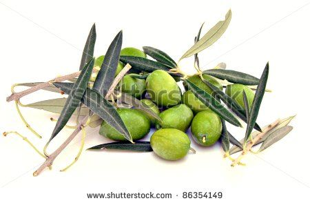 Olivenbäume Stockfotografie | Shutterstock