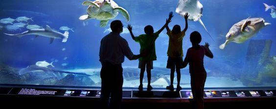 HMN Raising Auction - Adventure Aquarium - (4) Passes to Advenute Aquarium, Camden, NJ - http://www.adventureaquarium.com/