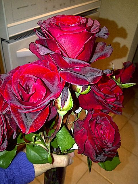 more great shares of Ria de Grassi's Authentic Haven Brand fed roses. Tip to extend cut flower life add 1/4 cup of Authentic Haven Brand tea to your flower vase