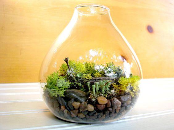 Moss terrarium...love it