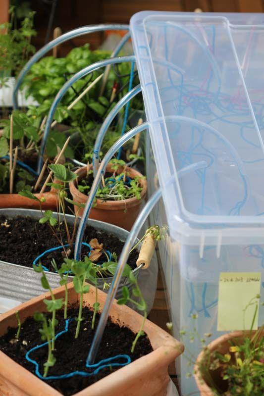 Bewässerungssystem selber bauen ( Faden)