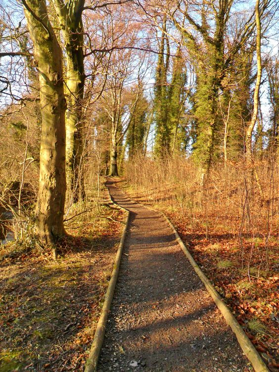 "vwcampervan-aldridge: ""The Dingle woods in Winter, Aldridge, Walsall, England All Original Photography by http://vwcampervan-aldridge.tumblr.com """