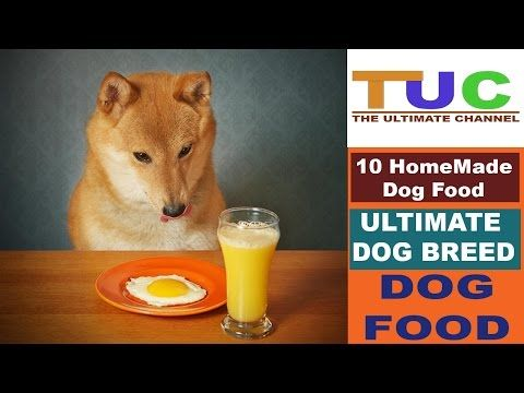 10 Homemade Dog Food In Hindi Dog Facts Popular Dogs The