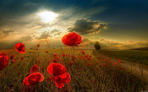Flor paisaje