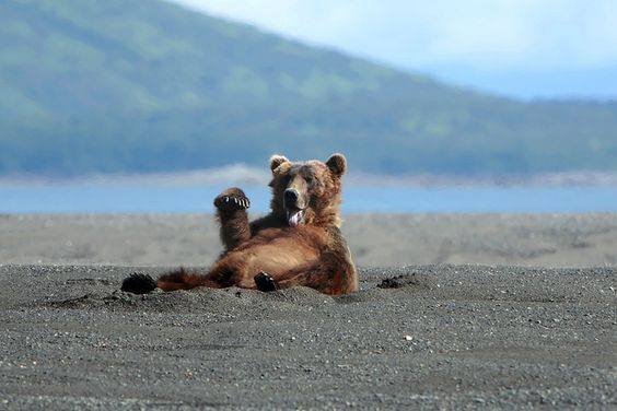 bear on a beach   Recent Photos The Commons Getty Collection Galleries World Map App ...