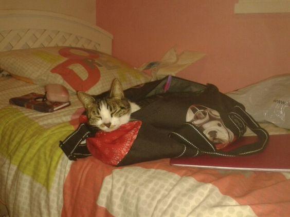 un chat dans un sac !