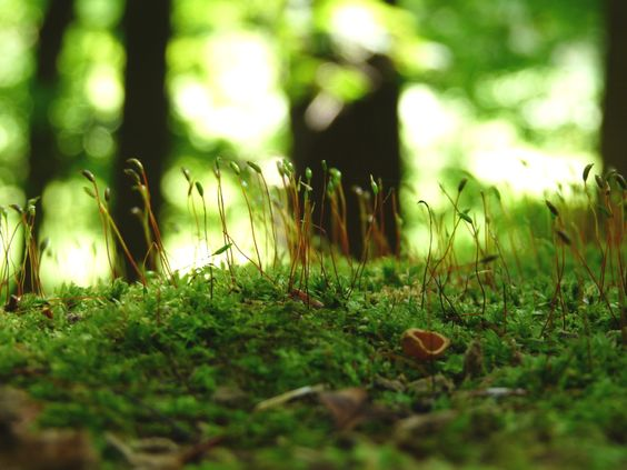 Macro close up of moss growing on a tree stump and sprouts. Nature.