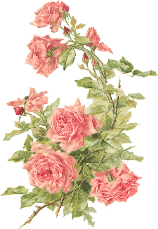 Wings of Whimsy: Peach Roses - Catherine Klein - PNG (transparent background) - free for personal use: