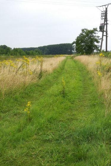 Weg in die Wiesen, Piwipp, Dormagen-Rheinfeld - Foto: S. Hopp