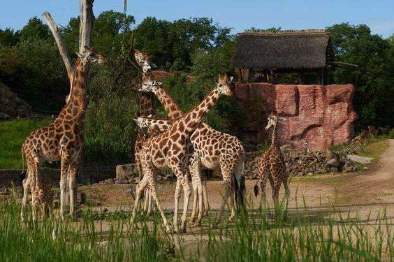 Spaß und Spannung mit der ganzen Familie Safari mitten im Ruhrgebiet gefällig? Dann ab mit dir und deiner Familie in die Zoom Erlebniswelt! Bei den vielen verschiedenen Wildtieren werden deine Kinde