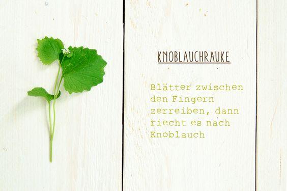 Wildkräuter sammeln - Knoblauchrauke (on kids, cooks & compost)  #wildkräuter #selbstversorgung