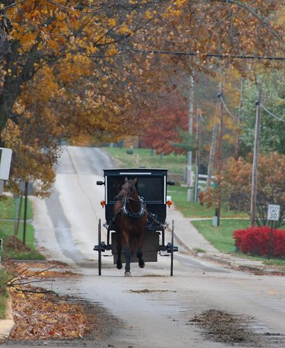 Amish Buggy in Shipshewana, Indiana