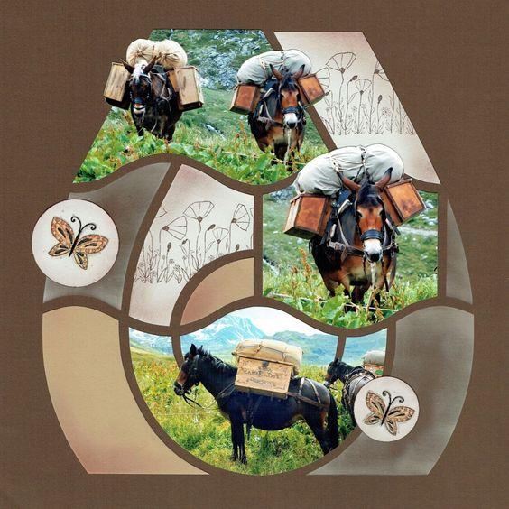 Page de Srap - Les ânes
