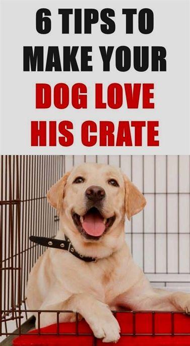 Dog Training Pitbull Dog Training Yuba City Dog Training 32259