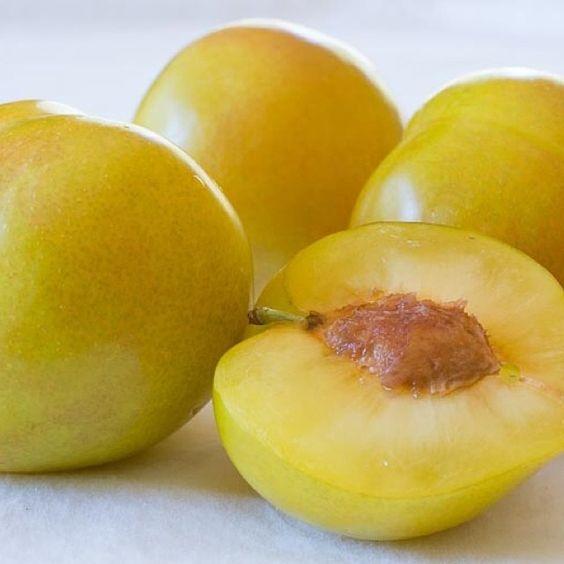 Lemon Plum @ preppings.com