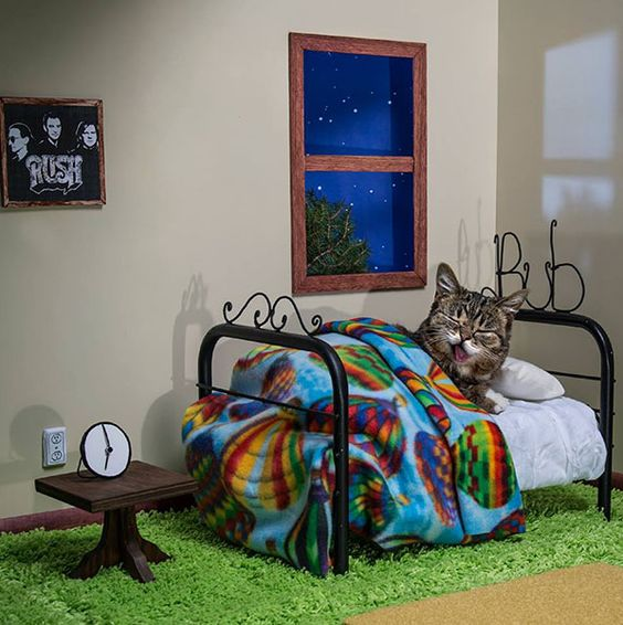Uusi internetjulkkis, Lil Bub! – Kaikkien aikojen suloisin kissa | Vivas