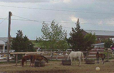 Kenlyn Arabians Facilities - Linda is a great horse women, with great horses