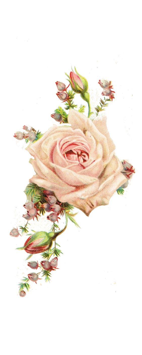 roses, vintage printable: