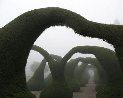 costa rica- topiary arches